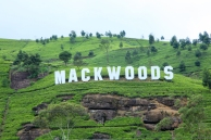 Mackwood Tea Gardens